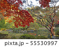 11月 紅葉の平安神宮 55530997
