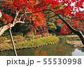 11月 紅葉の平安神宮 55530998