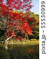 11月 紅葉の平安神宮 55530999