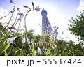 ドームガーデンの花と東京スカイツリー  55537424