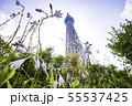 ドームガーデンの花と東京スカイツリー  55537425