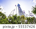ドームガーデンの花と東京スカイツリー  55537426