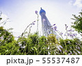 ドームガーデンの花と東京スカイツリー   55537487