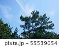 夏の空と松 55539054