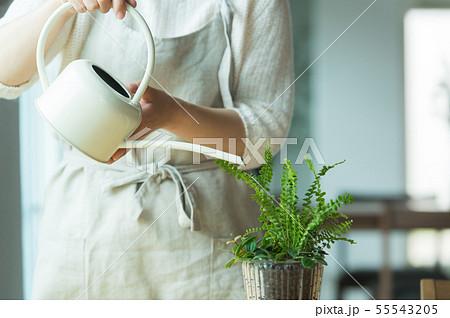 植物 水やり 55543205