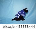 コスプレをしている黒猫の写真(お祭り) 55553444