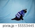 コスプレをしている黒猫の写真(お祭り) 55553445