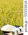 秋の田んぼと新米のおにぎり 55555616