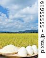 秋の田んぼと新米のおにぎり 55555619