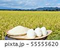秋の田んぼと新米のおにぎり 55555620