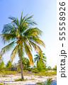Palm trees on white sand beach. 55558926