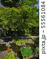 鎌倉 長谷寺 放生池に浮かぶ花菖蒲 55561084