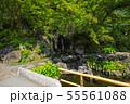 鎌倉 長谷寺 放生池 55561088
