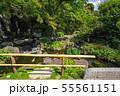 鎌倉 長谷寺 放生池の花菖蒲 55561151