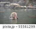 温泉に入りながらスマホでヤフーニュースをチェックしているようにみえるお猿さん 55561299
