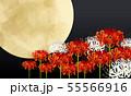 十五夜と彼岸花 55566916