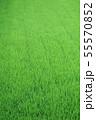 緑 稲 水田 55570852