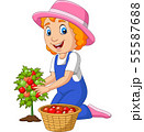 Cartoon little girl harvesting tomatoes 55587688