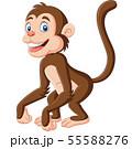 Cute baby monkey cartoon on white background 55588276