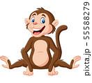 Cute baby monkey sitting on white background 55588279