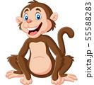 Cute baby monkey sitting on white background 55588283