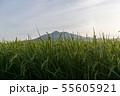 筑波山麓の実り 55605921