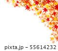 紅葉 もみじ 葉 背景  55614232