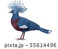 オウギバトのイラスト/Victoria Crowned Pigeon Illustration 55614496