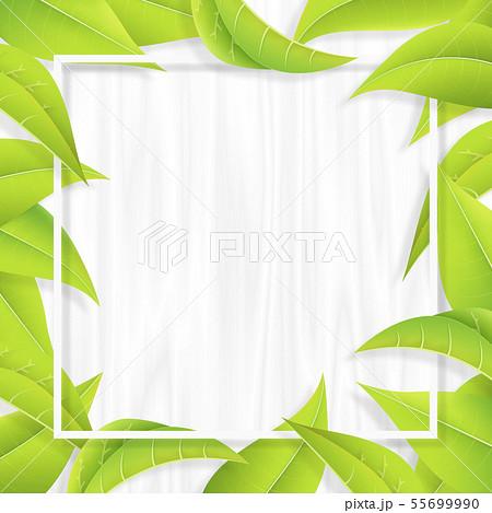 グリーン-葉っぱ-リーフ-フレーム-新緑-白木 55699990