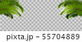 Tropical palm leaves on transparent background. 55704889