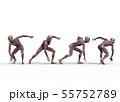 男性 解剖 筋肉 3DCG イラスト素材 55752789
