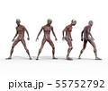 男性 解剖 筋肉 3DCG イラスト素材 55752792