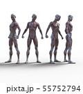 男性 解剖 筋肉 3DCG イラスト素材 55752794
