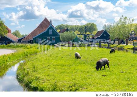 Zaanse Schans Neighbourhood of Zaandam 55780165