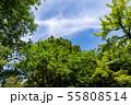 万葉の森 55808514