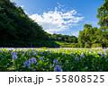 万葉の森 池 ホテイアオイ 55808525