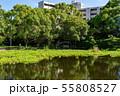 万葉の森 池 ホテイアオイ 55808527