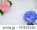 Pastel colored Hydrangea Flowers on White painted table 55920281