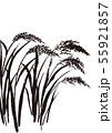 稲 水彩画 55921857