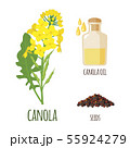 Canola Flowers with Pod and Seeds in flat style. 55924279