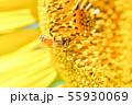 向日葵に蜜蜂 55930069