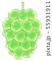 楕円粒のブドウ・緑・葉なし 55931911