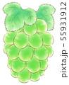 楕円粒のブドウ・緑・葉あり 55931912