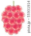 楕円粒のブドウ・赤・葉なし 55931914