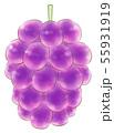 楕円粒のブドウ・紫・葉なし 55931919