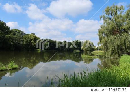 夏の石神井公園ボート池 55937132