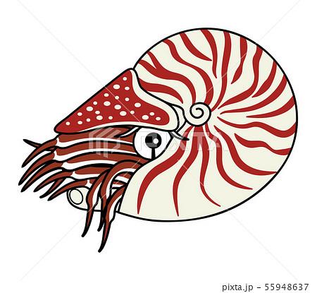 オウムガイ 深海魚 キャラクター イラスト 55948637