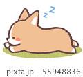 コーギー寝る-背景付き 55948836