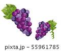 ブドウのイラスト素材 水彩風 55961785