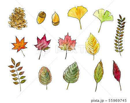 秋の葉 木の実 手描き水彩イラストセット 55969745